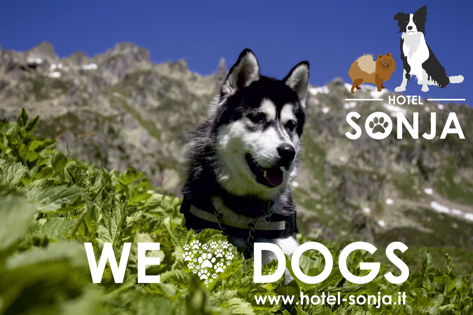 Dog friendly accommodation - Hotel Sonja im Ahrntal Südtirol